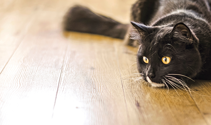 9 ways to help your cat beat the heat this summer cat 39 s for Diarrhea smells like fish