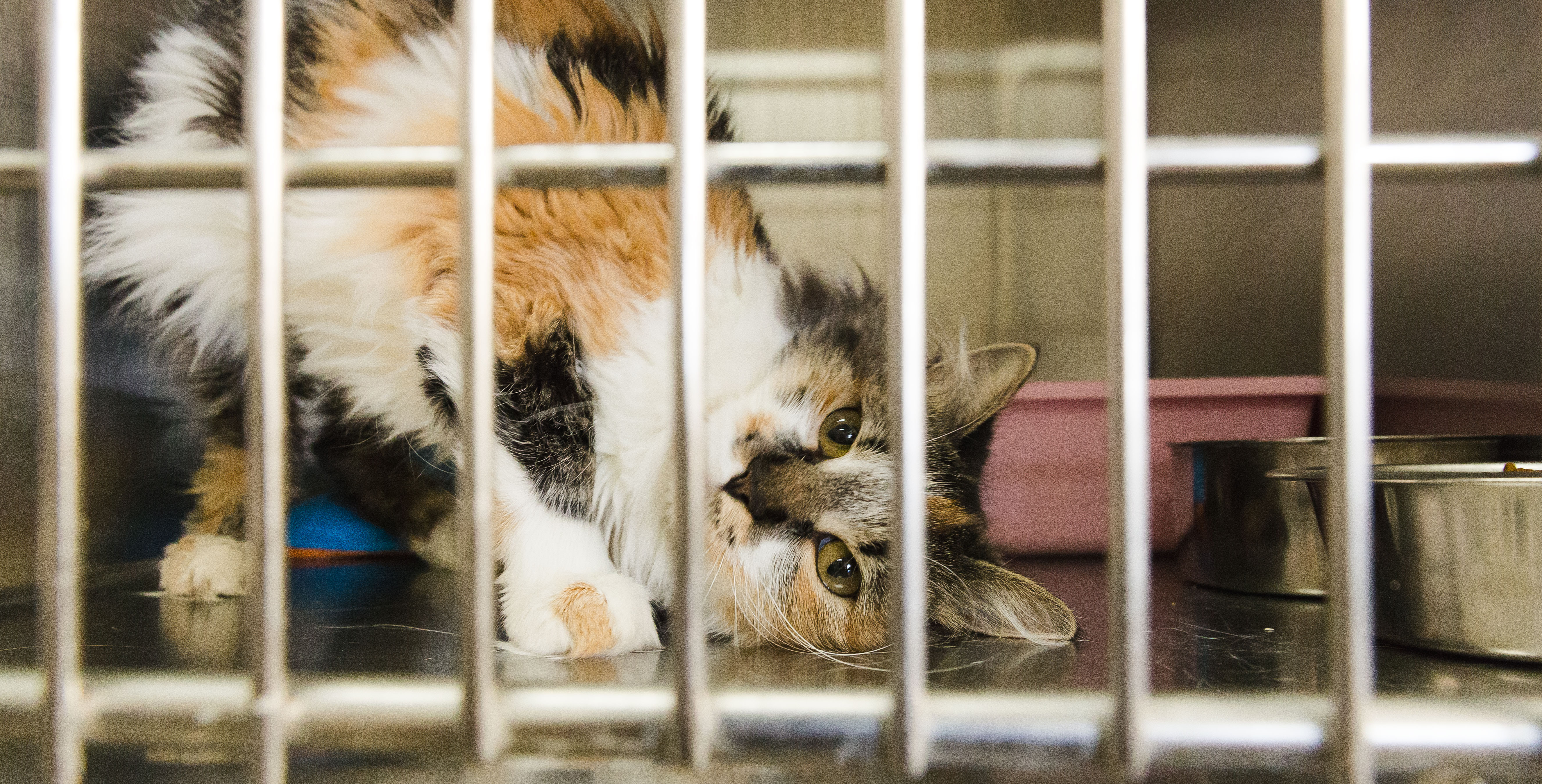 Tell me a good shelter for cats in Moscow