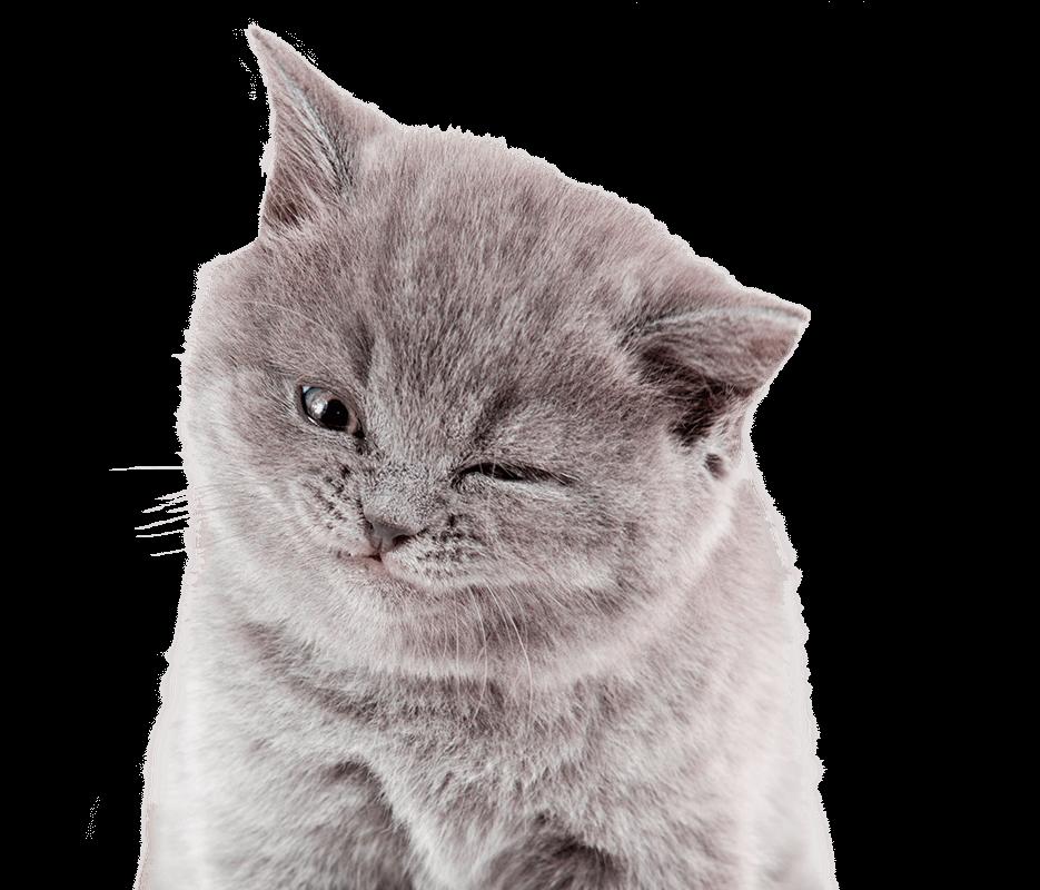 Cat S Pride Scoopable